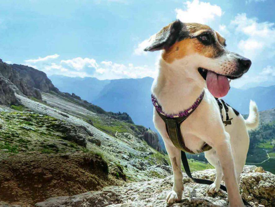 KURIER-Freizeit: Wandern auf 4 Pfoten