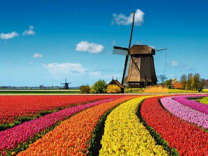 KURIER Freizeit: Holland im Tulpenrausch
